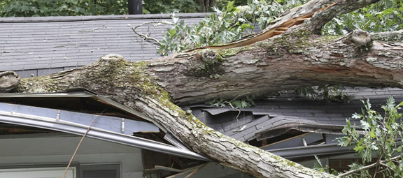 Roof damaged by tree that fell in a storm – storm damage experts on the job