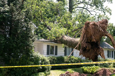Tree fallen on a house causing storm damage to a residential roof